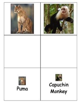 Special Education: Venezuelan Animals