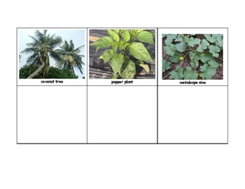 Life Skills: What Plant Does it Come From?