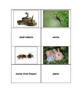Life Skills: What do Animals Eat?