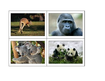 Life Skills: Zoo Animals