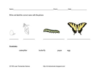 Life Stages of a Butterfly