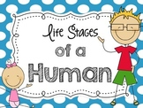 Life Stages of a Human