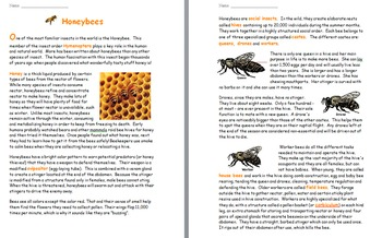 """""""Life"""" (The Discovery Series) Insects Worksheets"""