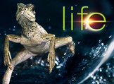 """""""Life"""" (The Discovery Series) Plants Worksheets"""