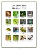 Life at the Pond Scavenger Hunt