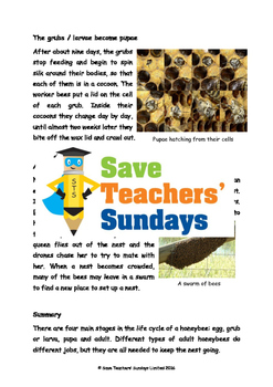 Life cycle of Honeybees Comprehension / Guided reading (4 levels of difficulty)