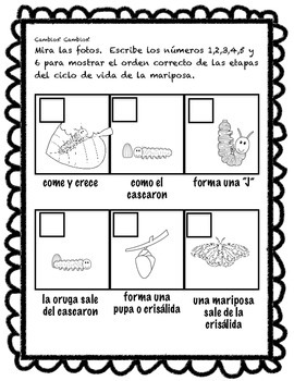 Life cycle of a butterfly in SPANISH -Ciclo de vida de una mariposa