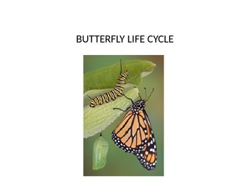 Life cycle of a butterfly power point including metamorphisis video!