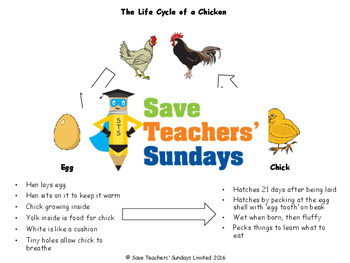 Life cycle of a chicken diagram