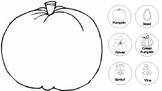 Life cycle of a pumpkin activity