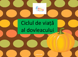Life cycle of a pumpkin in Romanian