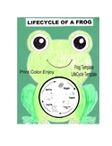 Life cycle of frog craft coloring art project kids template lifecycle frogs