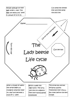 Life cycle package Butterfly, Lady beetle and Plant