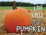 Life cycles : Life cycle of a Pumpkin