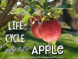 Life cycles : Life of an Apple