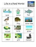 Life in a Pond Colorful Vocabulary Word List
