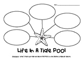 Life in a Tide Pool Nonfiction Graphic Organizer