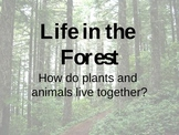 Life in the Forest - Phonics Phonemic Awareness PowerPoint