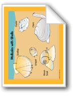 Life in the Ocean: Invertebrates