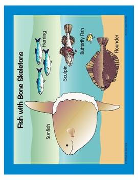 Life in the Ocean: Saltwater Fish