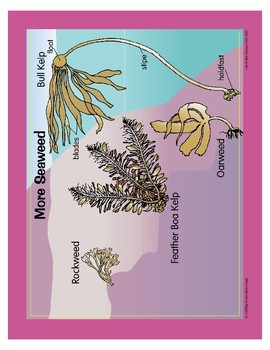 Life in the Ocean: Sea Plants