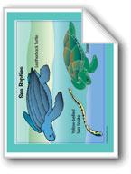 Life in the Ocean: Sea Reptiles