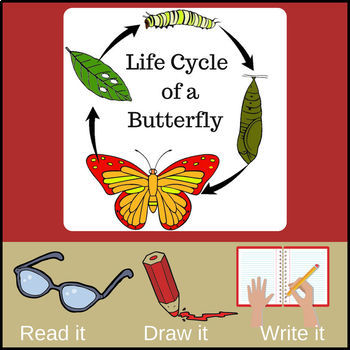 Life Cycle Of A Butterfly Read It Draw It Write It By Creations