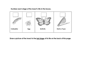 Animal Butterfly Life Cycle Read Science Worksheet 6 Sequence; Make Inferences