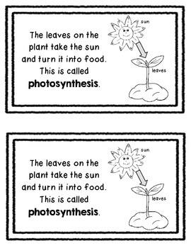 Life of a Plant Mini Book