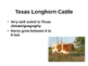 Life on the Cattle Trail