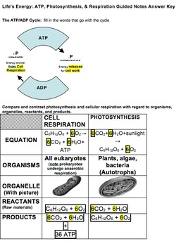 Life's Energy, ATP, Photosynthesis and Respiration 4 Day Bundled Unit