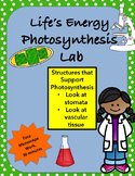 Life's Energy, Structures that Support Photosynthesis Lab