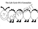 Lifecycle Of A Caterpillar
