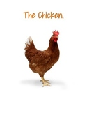 Lifecycle- The Chicken