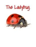 Lifecycle- The Ladybug