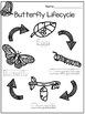 Lifecycle Tracing Worksheet Freebie!