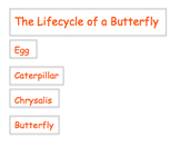 Lifecycle of a Butterfly Labels