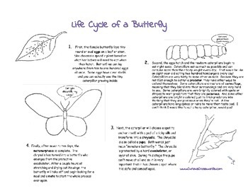 Lifecycle of a Butterfly Worksheet and Crossword