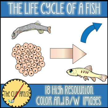 Life Cycle of a Fish Clipart