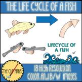 Life Cycle of a Fish Clip Art