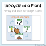 Lifecycle of a Plant (Distance Learning - Science Google Classroom)