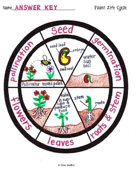 Lifecycle of a Plant Wheel