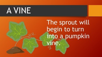Lifecycle of a Pumpkin