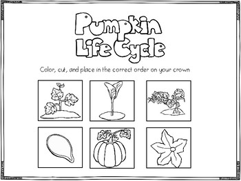 Lifecycle of a Pumpkin Crown