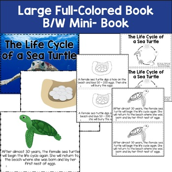 Life Cycle of a Sea Turtle  with Colored book, mini book, writing, and more.