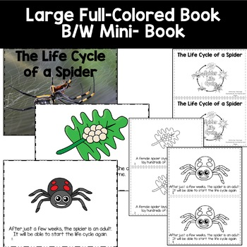Lifecycle of a Spider  with Colored book, mini book, writing, and more.