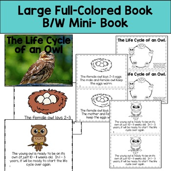 Owl Life Cycle Reading, Writing, and Math