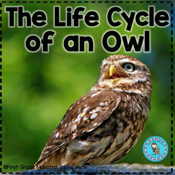 Lifecycle of an owl  with Colored book, mini book, writing