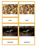 Lifecycle of the Pumpkin 3-Part Vocabulary Cards
