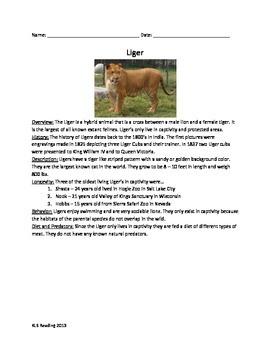 Liger - Lion & Tiger Hybrid - Review Article Facts Info Questions Vocab
